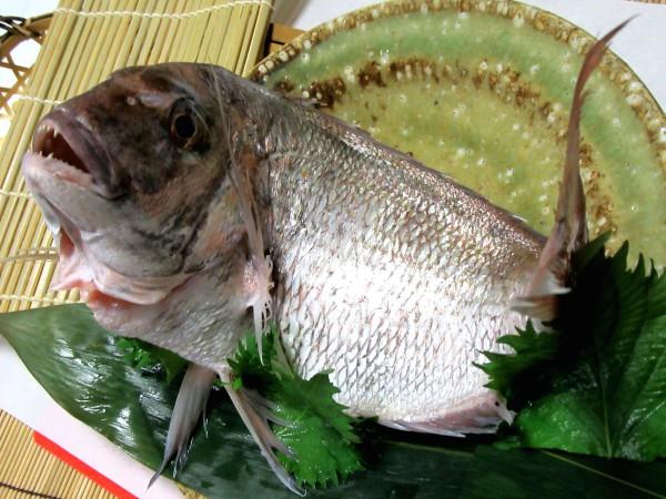 たい料理の献立と姿鯛の画像